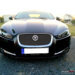 Prodám šlechtěnou kočku Jaguar XF - pouze hodným lidem